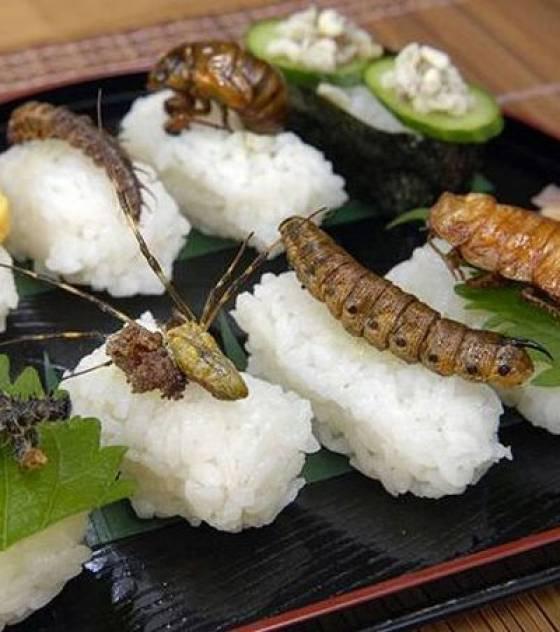 Cuisine et Gastronomie  - Page 4 Sushis-aux-insectes_16458_w560