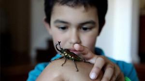 insecte pour noel