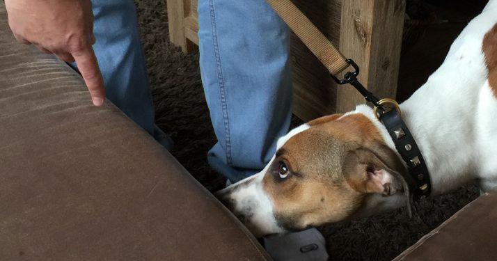 chien detecteur punaise de lit