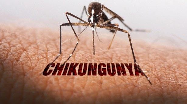 Comment choisir une bonne moustiquaire