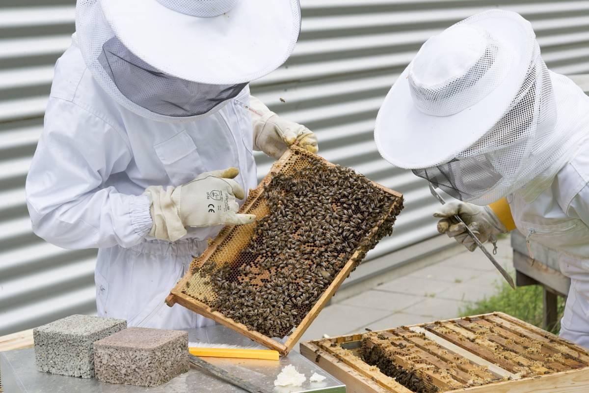 Vareuse pour l'apiculture